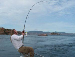 Les moulinets à tambour fixe haut de gamme sont parfaits pour la pêche des gros poissons tropicaux