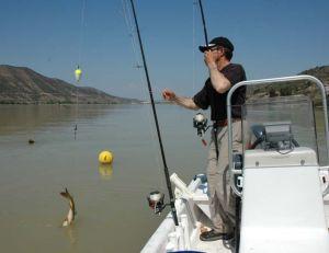Ce pêcheur a choisi un moulinet à tambour fixe pour pêcher avec un très gros vif