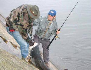 Les moulinets à tambour tournant pour la pêche du silure