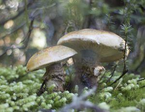 Et si les champignons permettaient de sauver le monde ?
