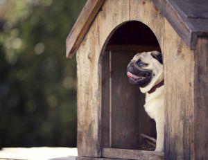 Conseils d'entretien d'une niche pour chien