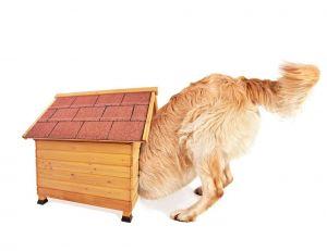 Niches et chenils : offrir le meilleur confort à son chien