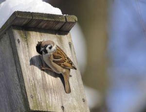 Pourquoi ne pas construire un nichoir pour les oiseaux de votre jardin, en ce mois de décembre ?