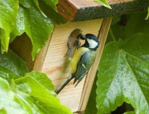 Choisir l'emplacement de votre nichoir à oiseaux