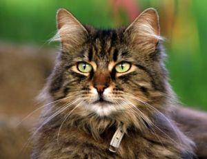 Trouver un nom pour son chat