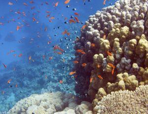 Pas moins de 49 % des animaux marins ont disparu, depuis 1970