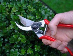Outil de jardin : les outils de taille