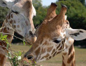 Les parcs animaliers autour de Paris