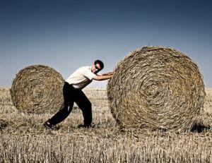 Participez aux tâches quotidiennes de la ferme