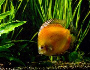 Choisir le bon paysage aquatiques pour ses poissons