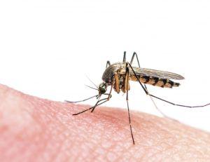 Où en sont les recherches pour contrer le virus Zika ?