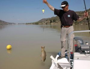 Pêche du silure à la bouée