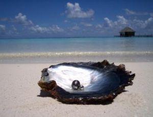 La perle a été posée mais l'huître et le paysage polynésien sont authentiques