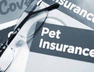 Choisir une assurance pour son animal de compgnie