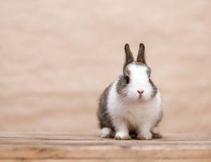 Que faire pour qu'on continue de prendre soin de votre lapin pinpin pendant les vacances ?