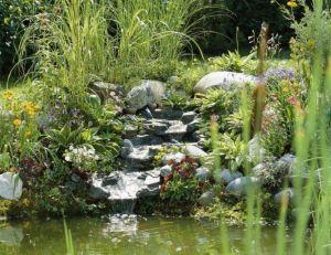 Petits bassins de jardin comment les installer for Plante exterieur sans entretien