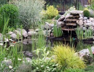 Petits bassins de jardin