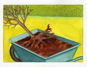 Praliner les racines nues dans la boue
