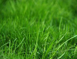 Créer en entretenir sa pelouse