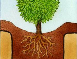 Planter des plantes de terre de bruyère