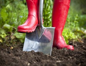 Planter un arbre sans déranger son voisin