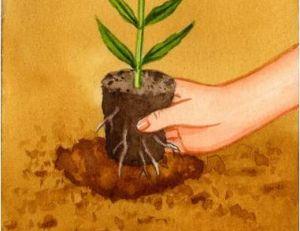 Planter des plantes vivaces