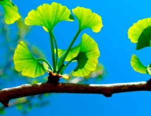 Cultiver des plantes médicinales