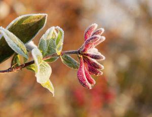 Que planter ou entretenir dans son jardin, en novembre ?