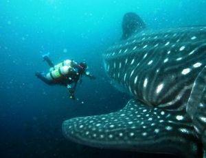 Une plongée aux Galápagos