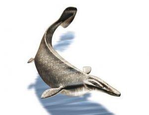 Reconstitution d'un reptile marin