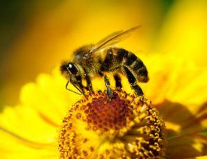 Le phénomène de pollinisation