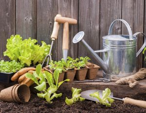 Potagers insolites