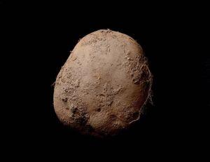 Aperçu du cliché de pomme de terre réalisé par Kevin Abosch - copyright Kevin Abosch