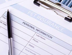 Quel est le prix d'une assurance pour animaux ?