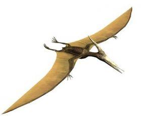 Reconstitution d'un ptéranodon
