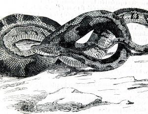 Python de Seba