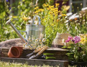 Que faire au mois de mai dans son jardin ?