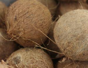 Recettes à la noix de coco