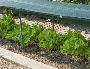 Que faire dans un jardin très ensoleillé ?