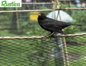 Les oiseaux peuvent venir picorer vos fruits -© C.Hochet