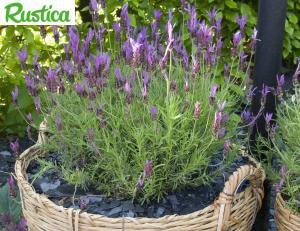 Plantes pour le balcon © Rustica F.Marre
