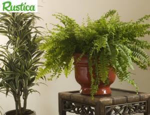 Reconna tre les maladies des plantes d 39 int rieur for Maladie plante verte interieur