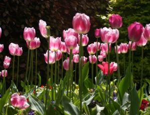 Les 4 saisons du jardinage
