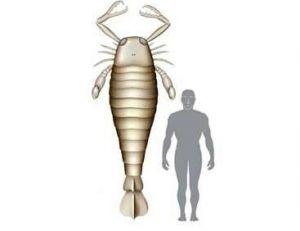 Scorpion géant 2.50 m, homme 1.80 m