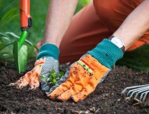 Se mettre à jardiner
