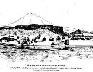 Gravure représentant une pêche d'éléphants de mer en Antarctique