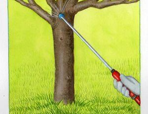 Soigner les arbres