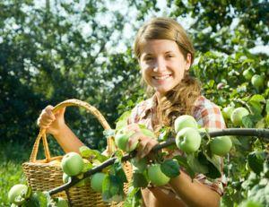 Soigner les arbres fruitiers