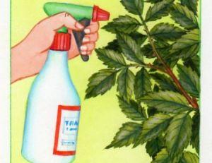 Pulvériser du produit sur ses rosiers
