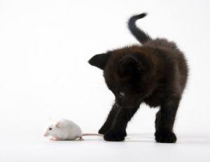 Le chat reste une des solutions les plus efficaces